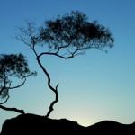 Vrksasana…or Tree Pose