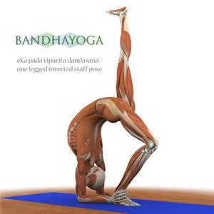 the anatomy of yoga  yoga flavored life