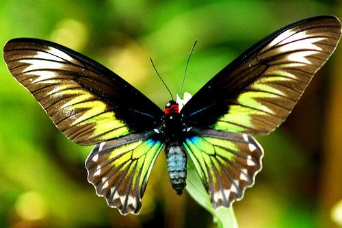 Leptiri - Page 15 Butterfly_wisdom_flckr