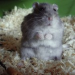 Get off that Hamster Wheel and Relax
