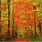 'Tis the Season…for Walking Meditation!
