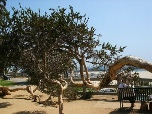 bendy-tree