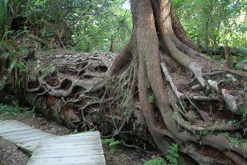 nursery-log