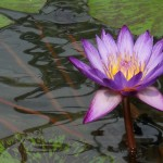 Boundless Freedom Meditation