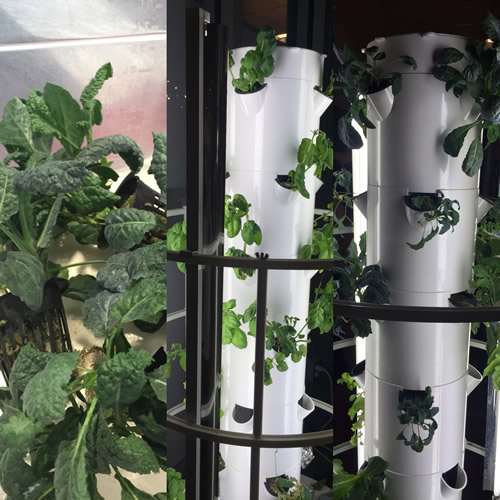 Aeroponic gardening in our schools Yoga Flavored Life