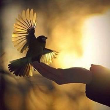 bird-hand